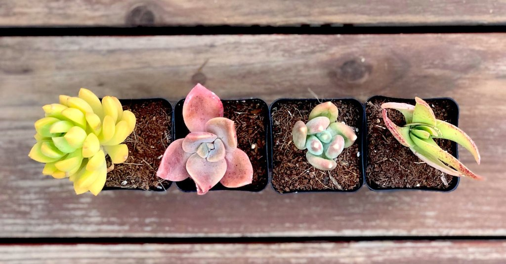 Succulent Studios Subscription