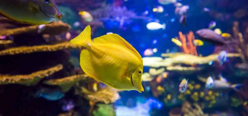 $10 Off Adult & $5 Off Child Tickets to Ripley's Aquarium